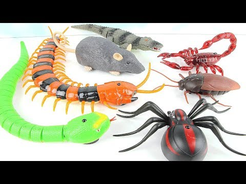 Super Creepy Toys Collection - R/C Spider Cockroach Centipede Snake Hercules! Learn Dinosaur