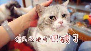 Download 【李喜貓】知名铲屎官公然去别人家拐猫,最后猫没骗到还被撵了出来,好丢脸 Video