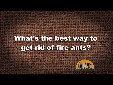 Q&A – What's the best way of get rid of fire ants?