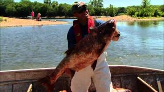 An Old Fashioned Strategy to Keep Asian Carp at Bay