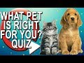 What Pet Should I Get? Take a Quiz