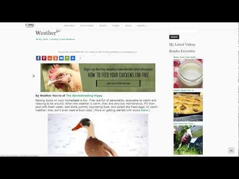 Tips For Rasing Ducks In Cold Weather