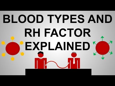 Blood Types and Rh Factor Explained