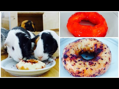 Doughnuts For Guinea Pigs   How to