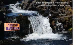 Birds Singing and Water Sounds❤enchanting sounds of forest nature💕Sleep or Relaxation🤷♀️#Playlist