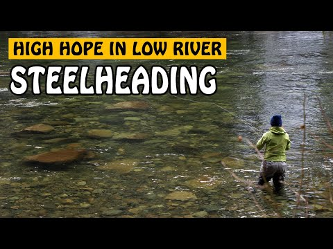High Hopes in Low River - Stamp River Winter Steelhead | Fishing with Rod