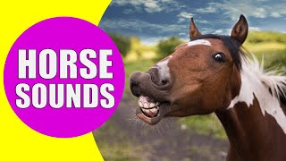 HORSE SOUNDS | Learn Animals with Kiddopedia #Shorts