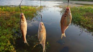 Bass Love the Triple Shad Rig!