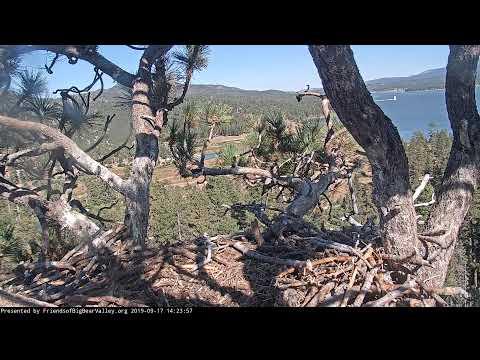 Xxx Mp4 Big Bear Bald Eagle Nest Cam 3gp Sex