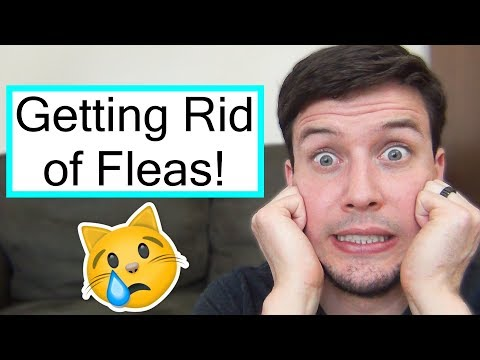 How To Treat Your Cat For Fleas