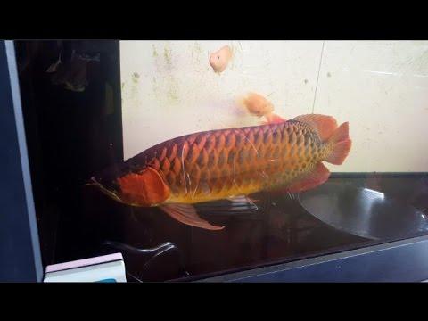 XIAN LONG FISH SHOP!
