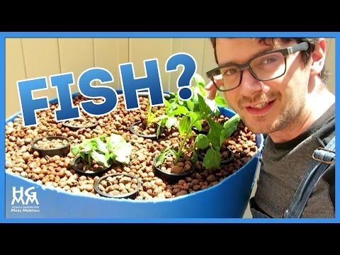 Use FISH to Grow a Small Space Container Garden. Really!