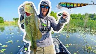 Topwater Bass Fishing | Post Spawn CRUNCHING!
