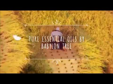 Pure Essential Oils By Babylon Tree - BEST Essential Oils Brands in UK