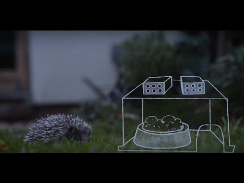 The Last Hedgehog in Avon?