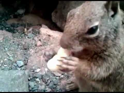 Squirrels eating out of my hand Morro Bay Pismo Beach part 1
