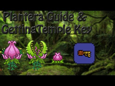 How To Defeat Plantera & Get The Temple Key In Terraria
