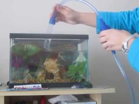 2.5 Gallon Betta Tank Water Change