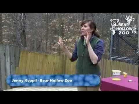 Animal Encounters: Hedgehogs - Hibernating Animals