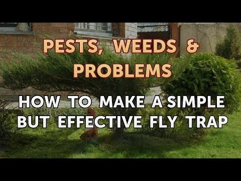 How to Make a Simple but Effective Fly Trap