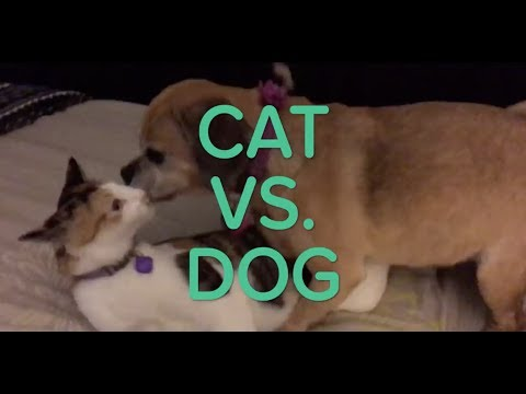 CATS🐱 VS DOGS🐶