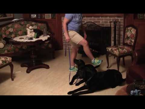 Guide Dog Commands