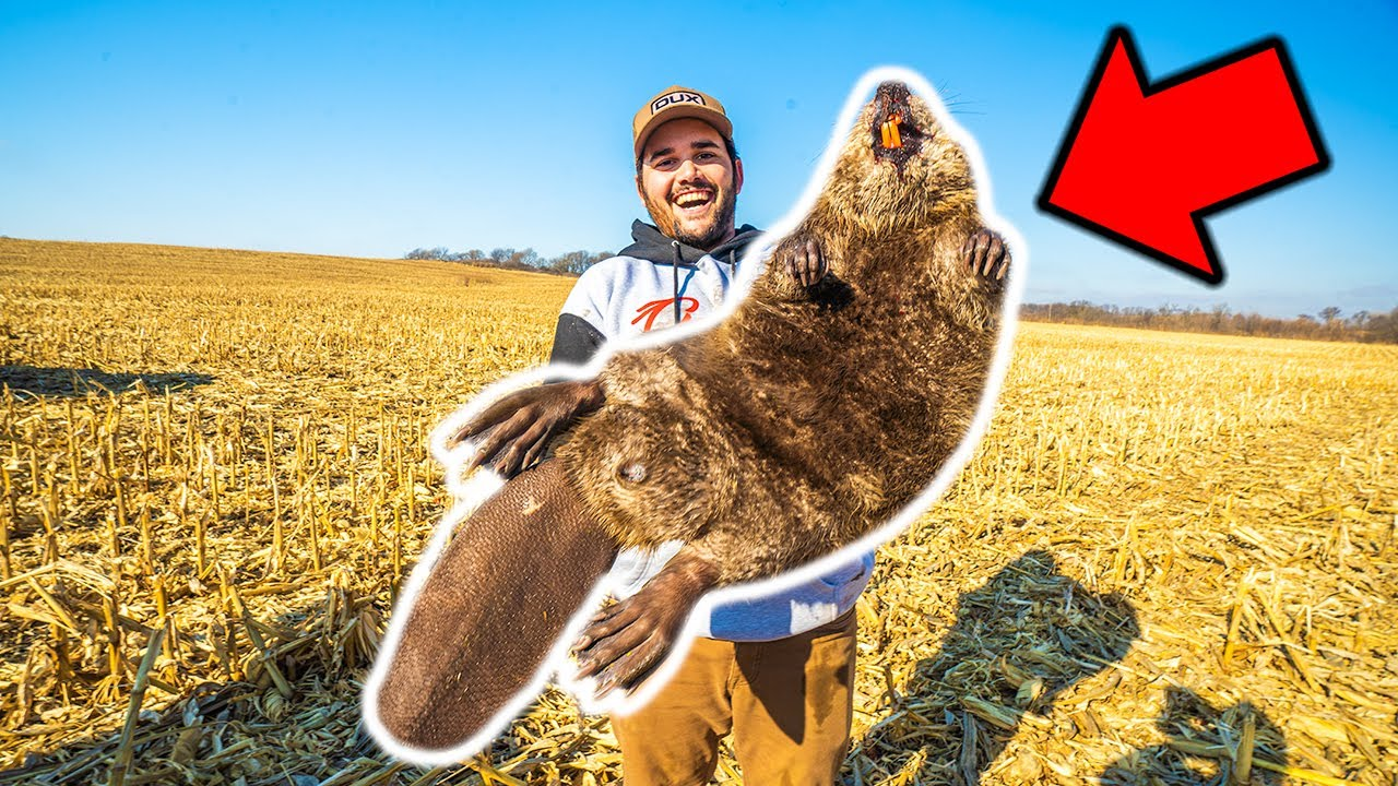 I Trapped the GIANT BEAVER at the FARM!!! CATCH CLEAN COOK!