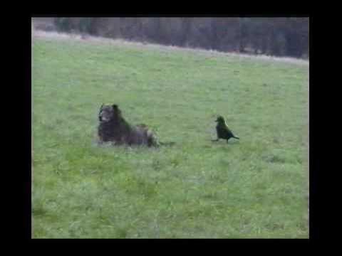 Bird biting dog's tail
