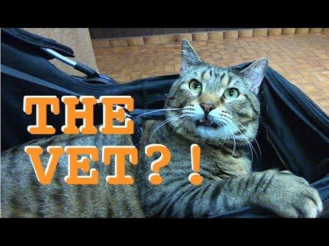 Dental Emergency & Jax Goes To The Vet