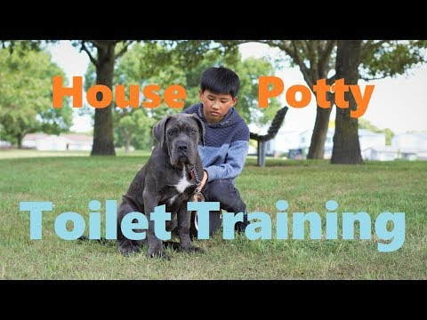 How to Potty Train Puppy Toilet Training.