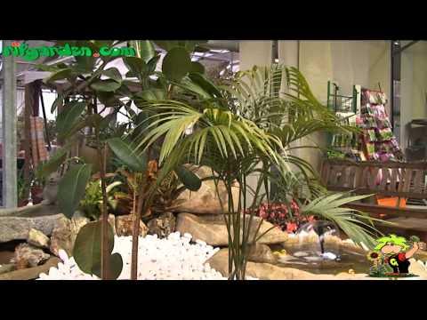 Common pests of houseplants