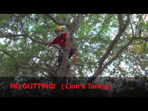 Pruning Live Oak For Health & Safety.mov