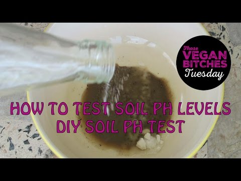 How To Test Soil pH Levels | DIY Soil pH Test
