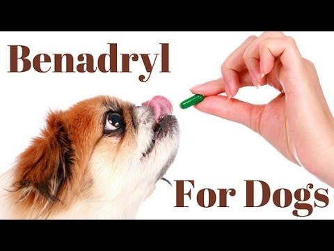 Benadryl Dosage For Dogs Chart