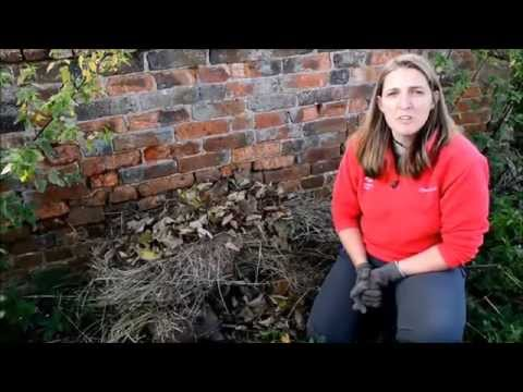 How to make a home for a hedgehog to hibernate in
