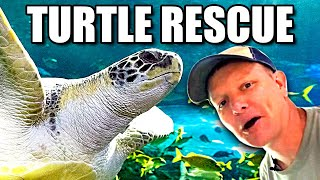 Why I Love Sea Turtles (They're AMAZING) - Smarter Every Day 239