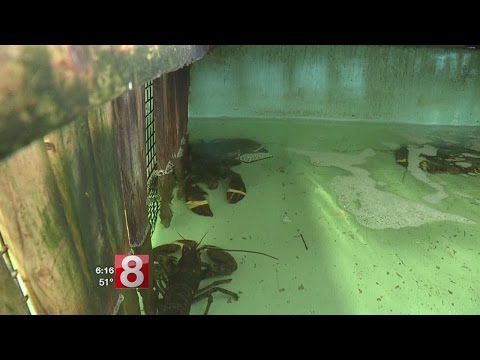 Lobster fishermen face tough times with new regulations