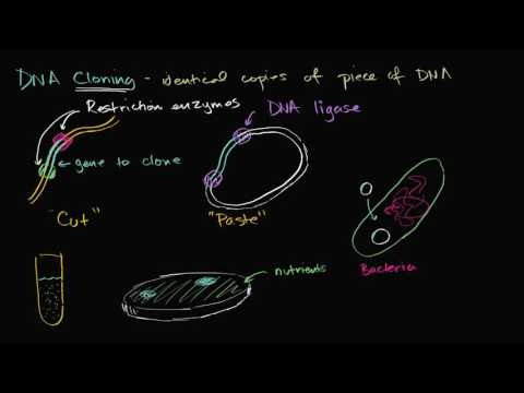 DNA cloning and recombinant DNA | Biomolecules | MCAT | Khan Academy