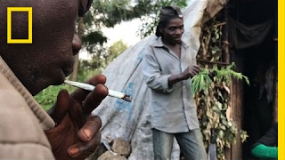 Risking Arrest, Pygmies Deal Weed to Survive in the Congo   National Geographic