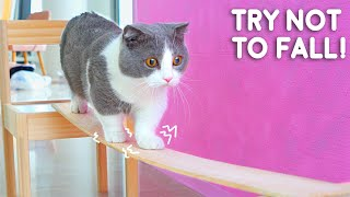 Cats Try Not To Fall Off Compilation