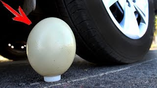 EXPERIMENT: CAR VS OSTRICH EGG
