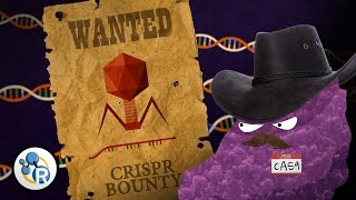 Genetically Modified Humans? CRISPR/Cas 9 Explained