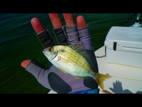 Fishing with Live Pinfish