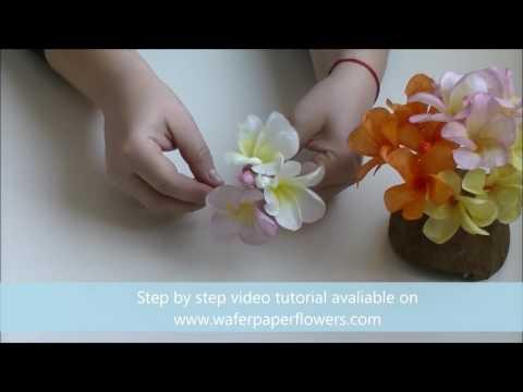 Wafer Paper Flower Frangipani with Petya Shmarova Trailer