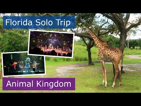 Day 5 | Animal Kingdom Festival of the Lion King | Walt Disney World solo trip | Florida 2017