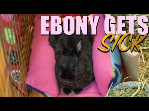 Ebony Gets Sick 😢 And Makes a Full Recovery! 💜