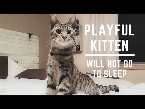 Playful Kitten Not Ready for Bed | Pouncing to Lion Sleeps Tonight Song