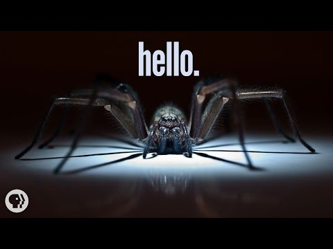 Why I'm Scared of Spiders