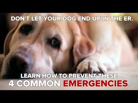 How to Help Prevent 4 Common Dog Emergencies