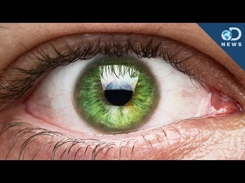 Those Eye Floaters Live Inside You!